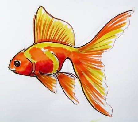 how to draw goldfish step by step