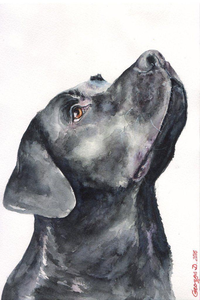 Black Labrador - Marmont Hill