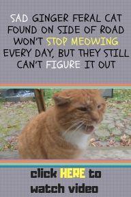 Heartwarming Cat Rescue Story Cat Cats Kitten Catstories