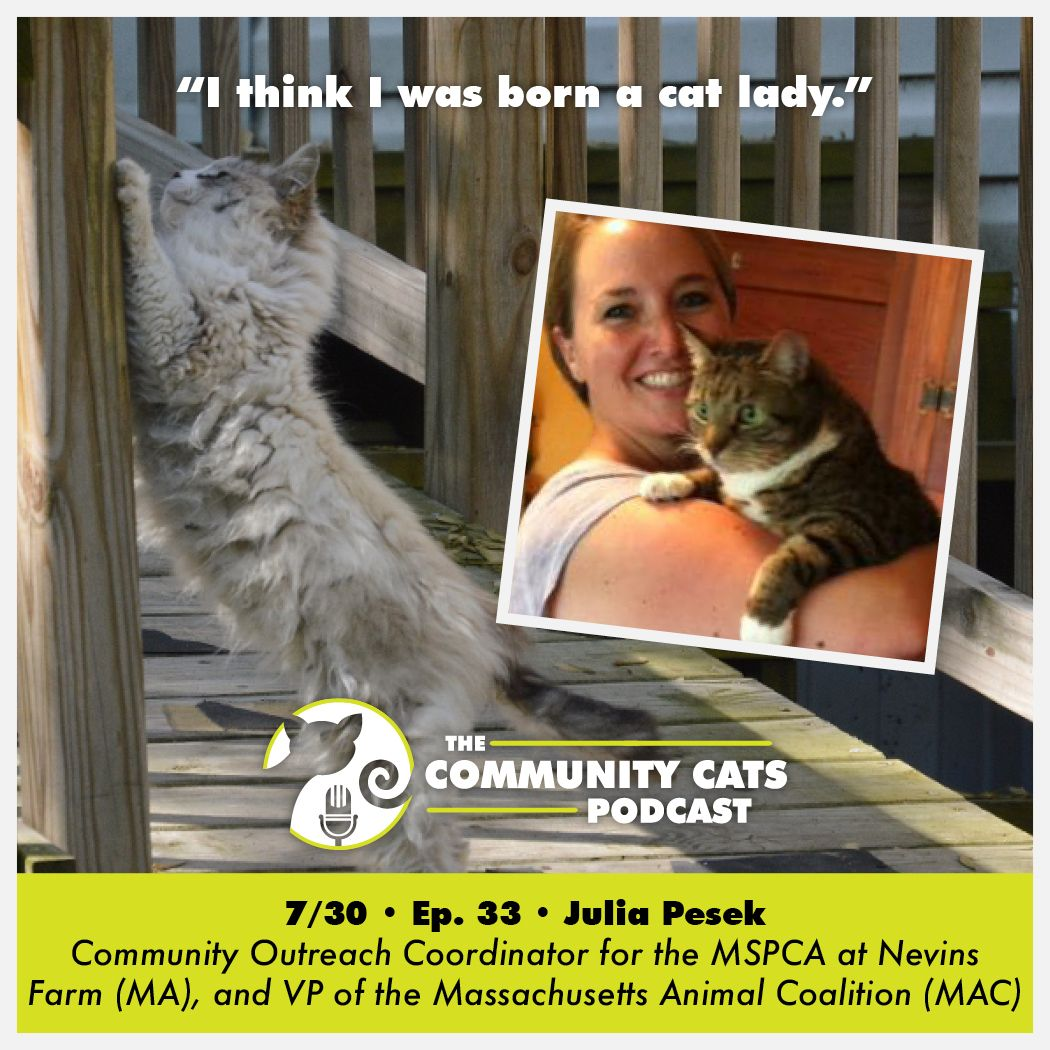 Interview Julia Pesek Community Outreach Coordinator For The Mspca At Nevins Farm Ma And Vice President Of The Massachusetts Animal Coalition Mac Community Outreach Animals Cats