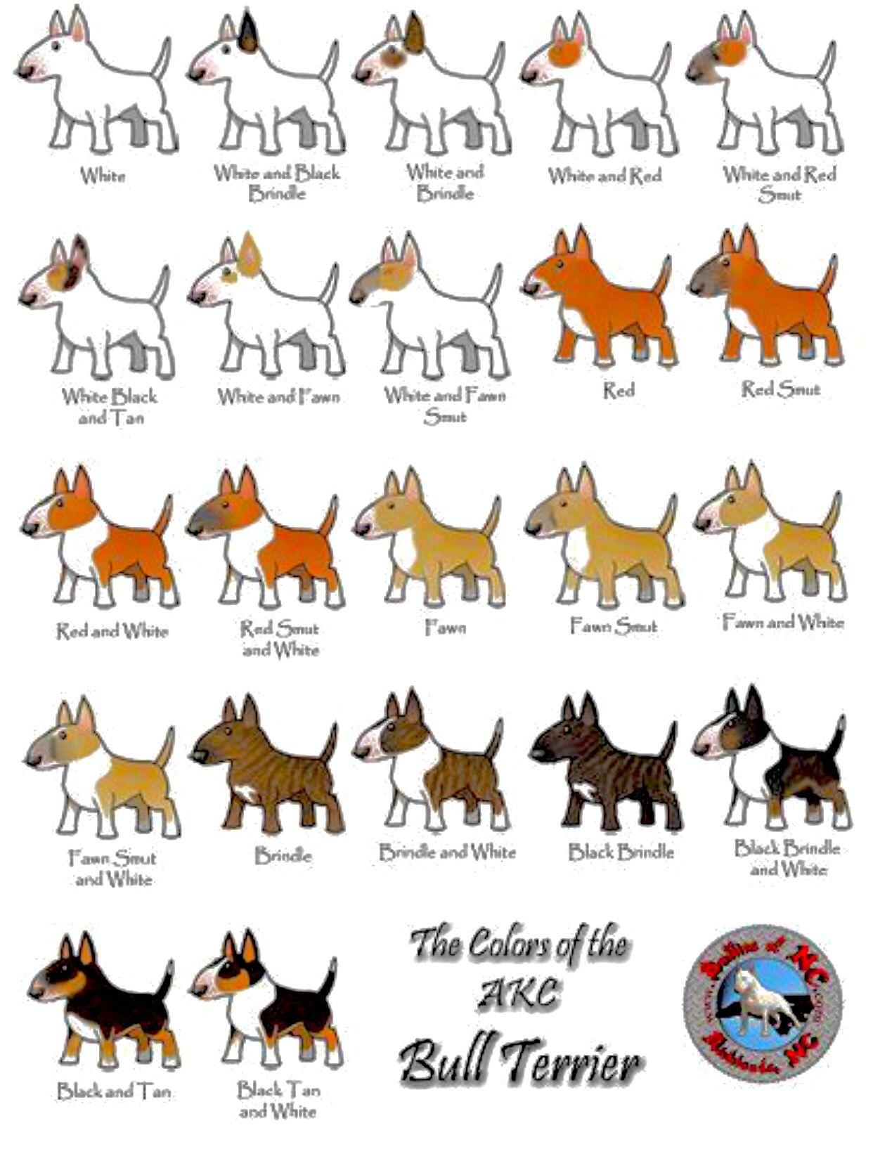 The Colors Of The Akc Bull Terrier Bull Terrier Miniature Bull