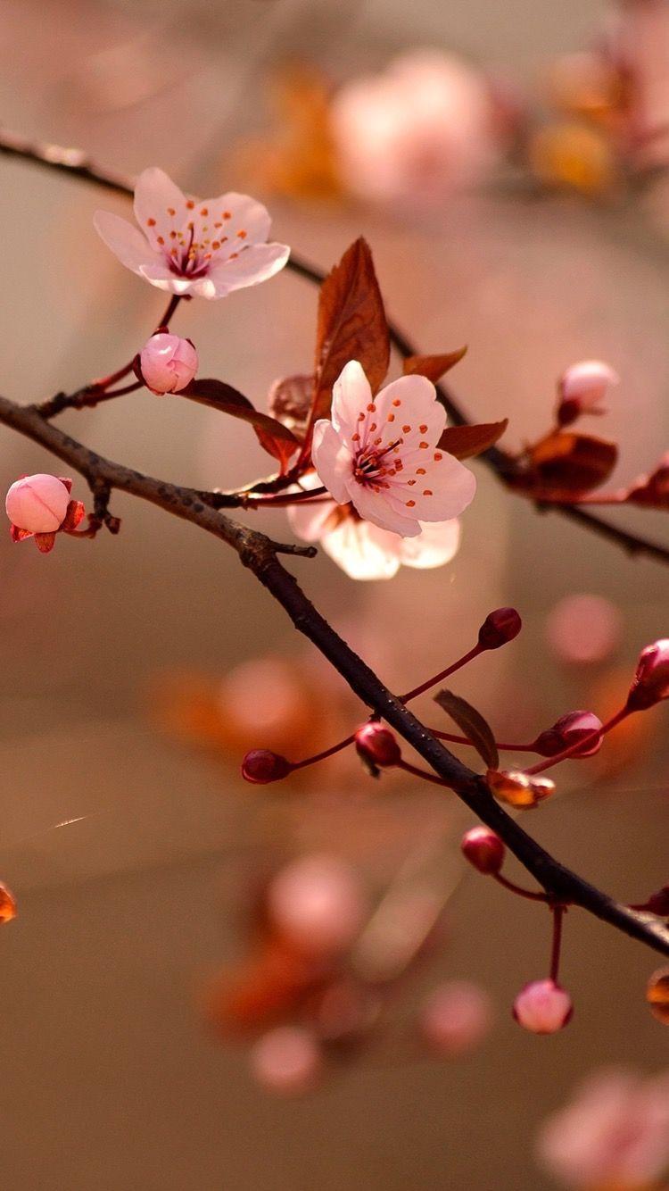 Vesna Sady Cvetenie Cvetushie Sady Cvety Priroda Prekrasnye Sady Cvetushie Derevya Gardens Spri Vintage Flower Tattoo Flower Wallpaper Blossom Trees