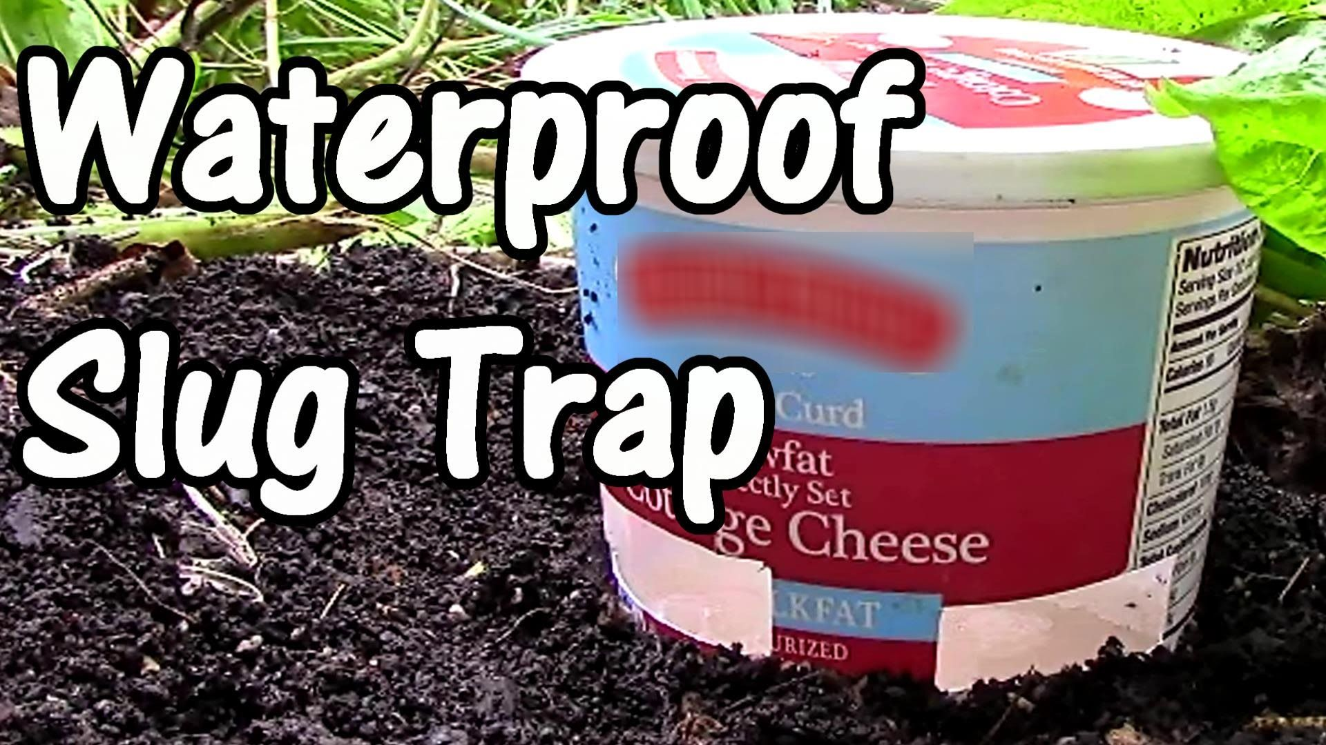 This Slug Trap Uses Water Flour Yeast And Sugar And Works Great A Good Solution For Those Of Us Who Don T Drink Beer With Images Slug Trap