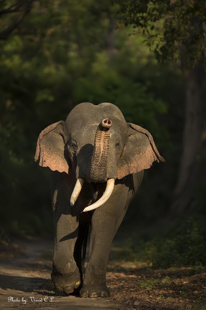 Animal Insurance Elephants Photos Majestic Animals Animals Wild
