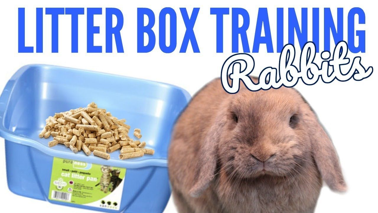 How to litter box train your rabbit! Litter box, Litter