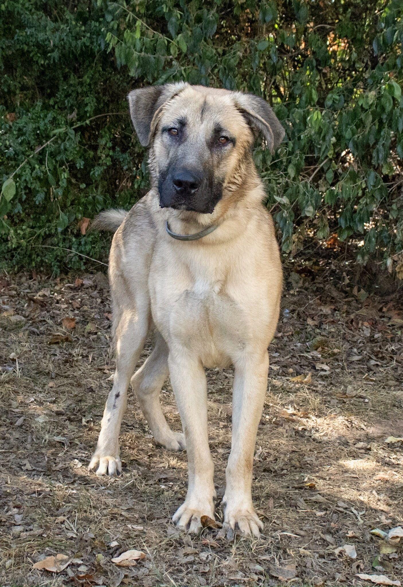 Adopt Harris on in 2020 Hunde, Bilder