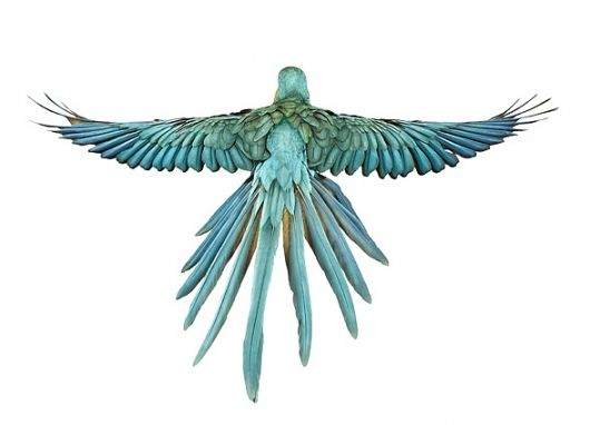 Andrew Zuckerman 'Bird' Series