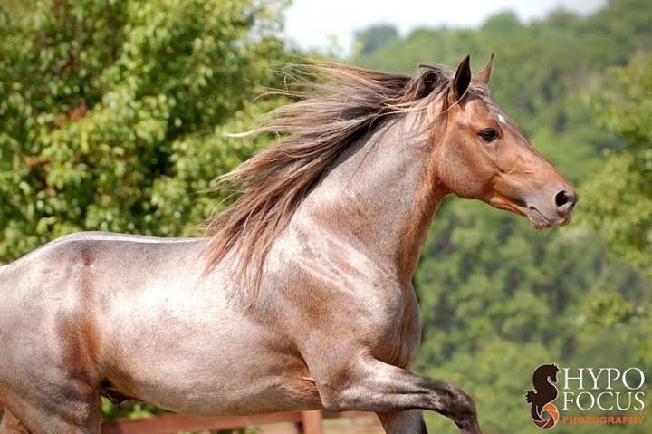 stock de photos seltene pferdefarben pinterest mein pferd und pferde. Black Bedroom Furniture Sets. Home Design Ideas