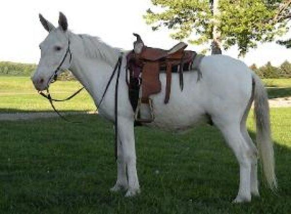 beautiful! I want a white mule!!!!