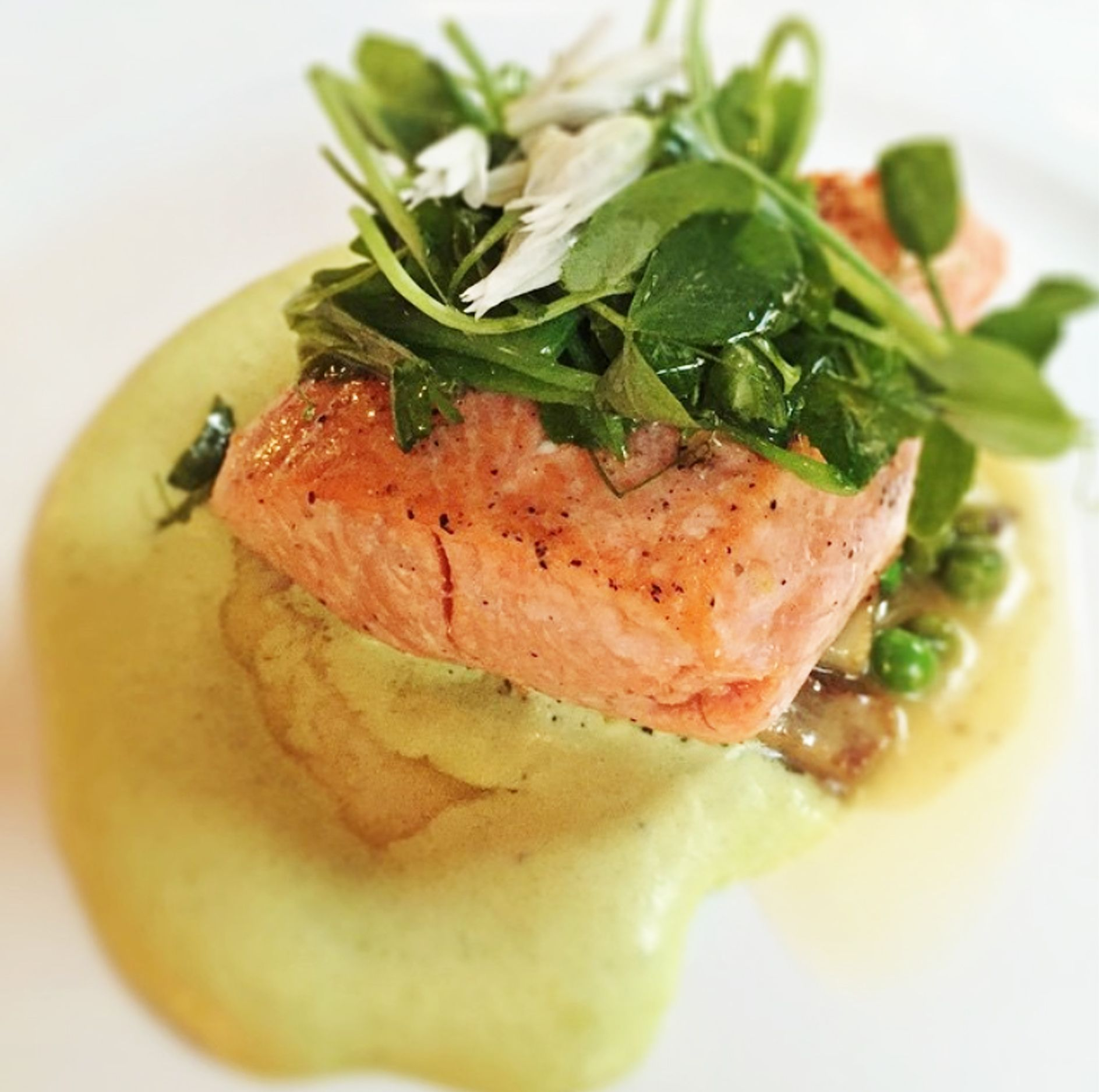 Another great photo taken by @me_andmybigmouth! This time it's of our Salmon with English peas, morels, and spring onion-lardo vinaigrette.