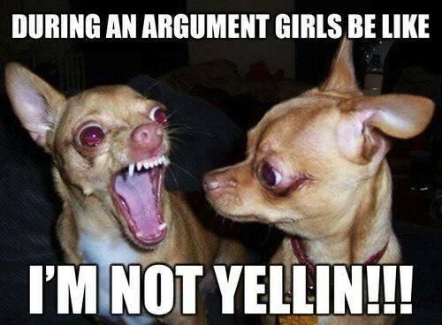 9b01b6bb4893b2ff1e03701b35fe4f96 top 21 most funniest chihuahua memes memes, humour and hilarious