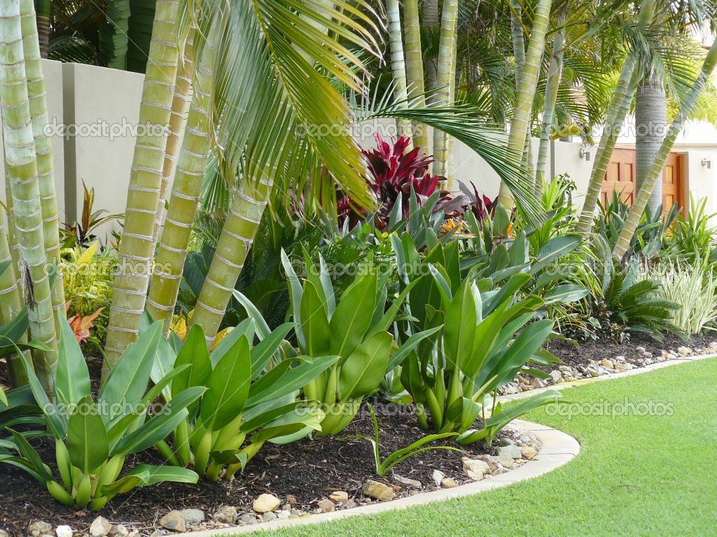 Tropical patio plants red tropical garden border stock for Tropical courtyard garden design