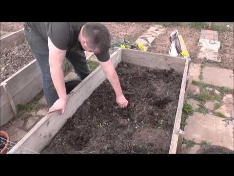 Steve's Allotment Episode 5 - Preparing the Carrot Bed - YouTube