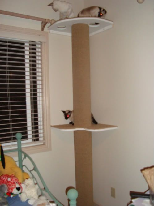 How To Build Your Own Cat Tree Cat Pole