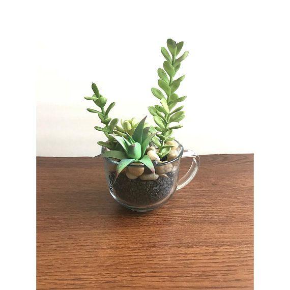 Succulent Tea Cup Succulent Pot Succulent Terrarium Boho Decor