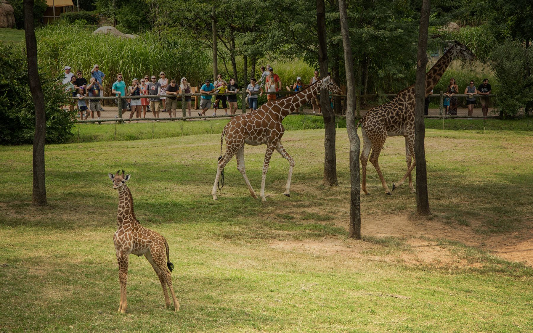 Things to do in Nashville | Nashville Zoo Hours | Nashville Zoo