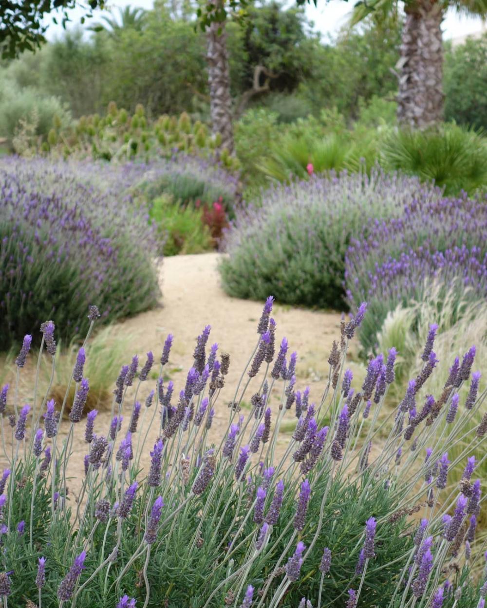 Pin on Comporta garden