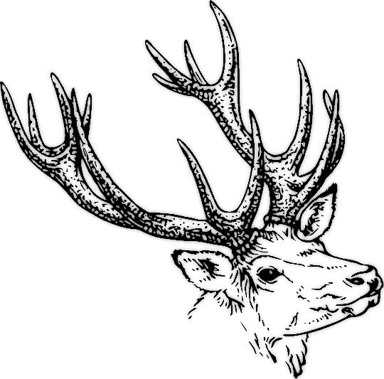 Free Stag Head Png Use Inkscape To Make A Svg File Deer Cartoon Stag Head Deer Skulls