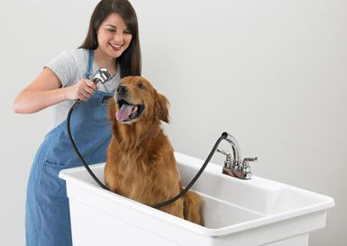 40 Utility Sink For Laundry Room Perfect For Bathing Our Dogs