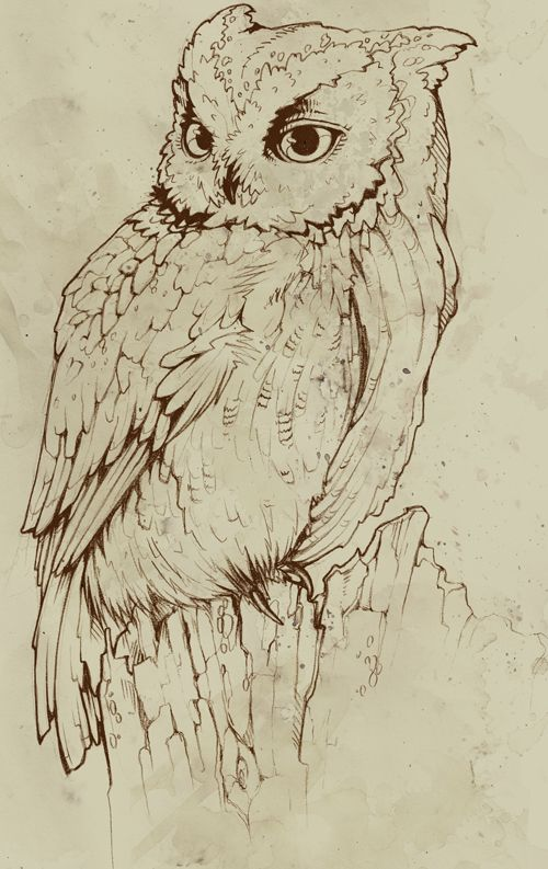 Pin By Ewa Nowak On Art 2 Owls Drawing Bird Art Bird Drawings