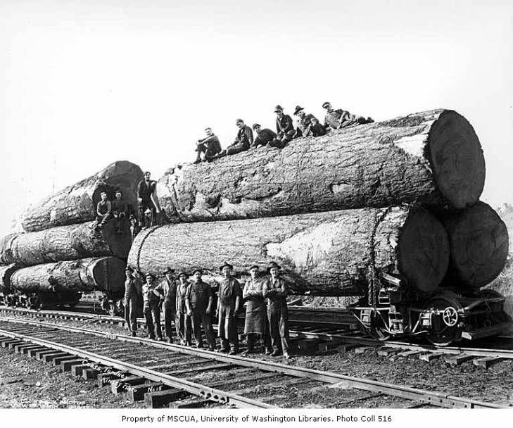 Loggers with large logs on skeleton trucks, Coats-Fordney