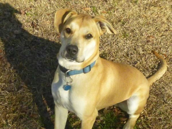 True Blu Is Up For Adoption At Panhandle Animal Lovers Crestview