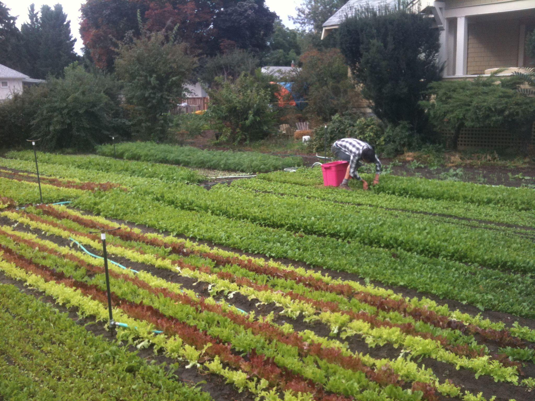 80k Year Farming On 1 3 Acre Square Foot Gardening Meets Commercial Farming Urban Farmer Commercial Farming Sustainable Garden Design