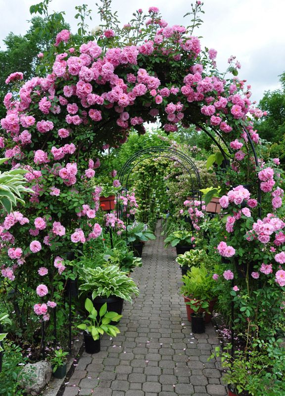 Making A Grand Entrance With Images Garden Arches Beautiful
