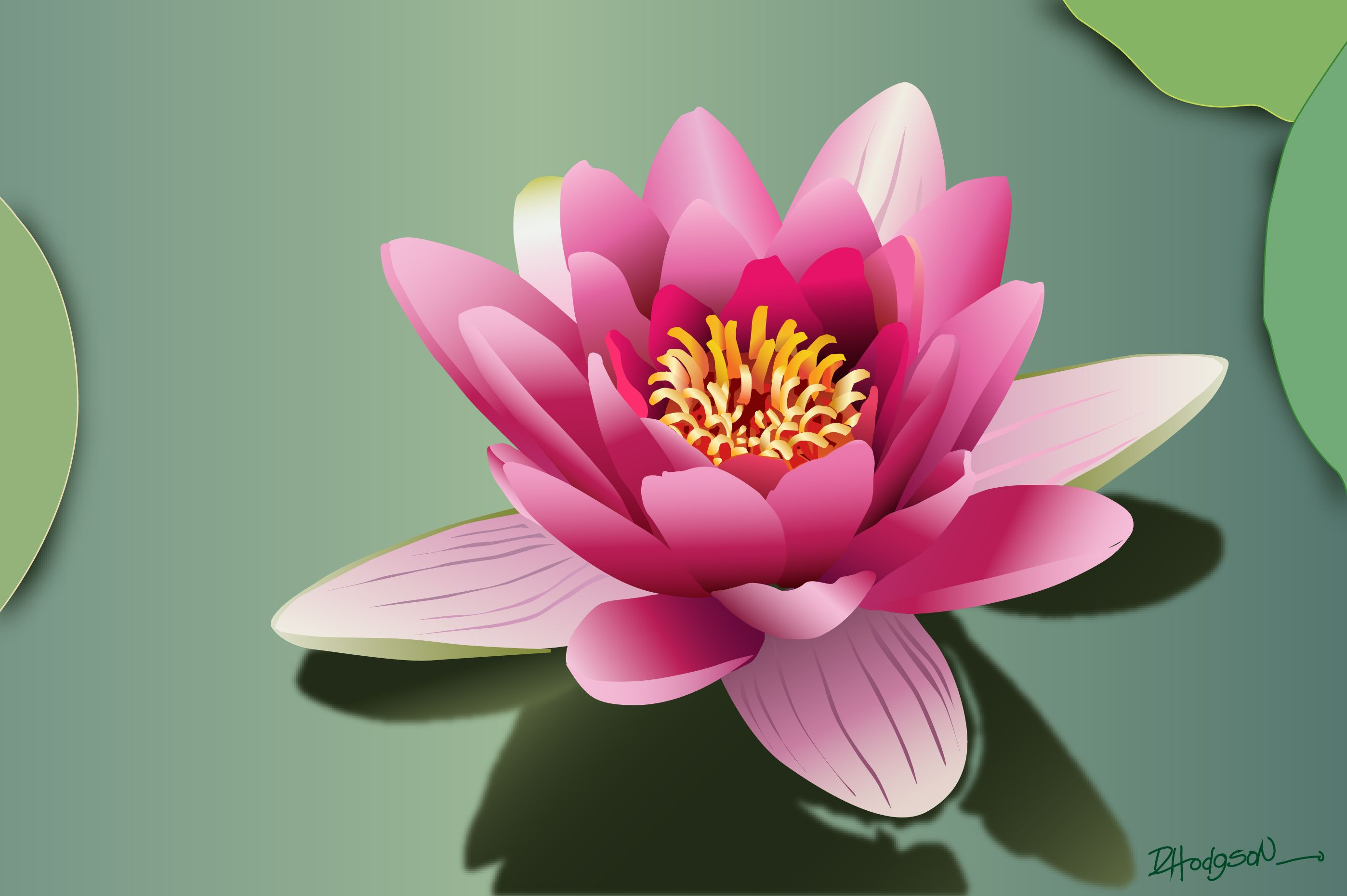 Lotus flower pink my art and other wonderful things lotus flower pink dhlflorist Images