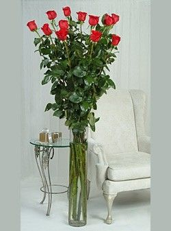 5 6 Foot Tall Roses From Ecuador Talk About Long Stemmed Roses Kn