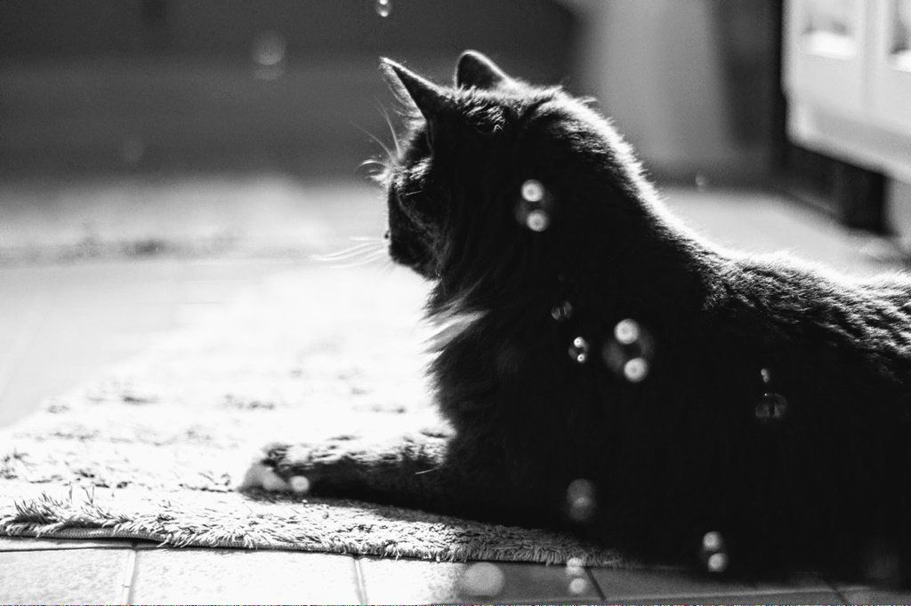 Cats In The Cradle Lyrics Catswhichlooklikehitler Code 558203253 Cat In Heat Cat Breeds Cat Adoption