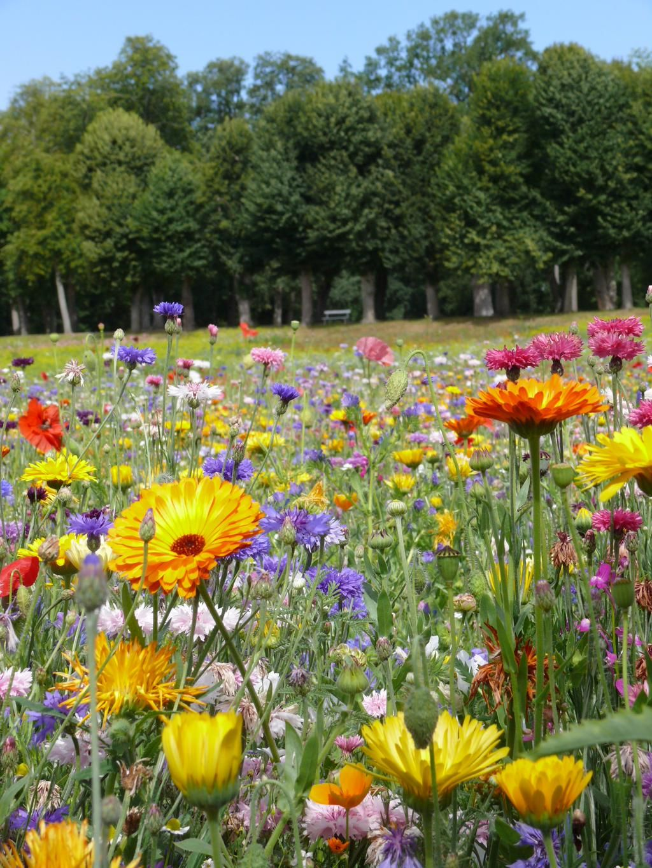 Meadow In My Garden on Garden, Meadow garden, Succulents
