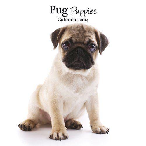 Pug Puppies 2014 Wall Calendar Http Www Thepuppy Org Pug