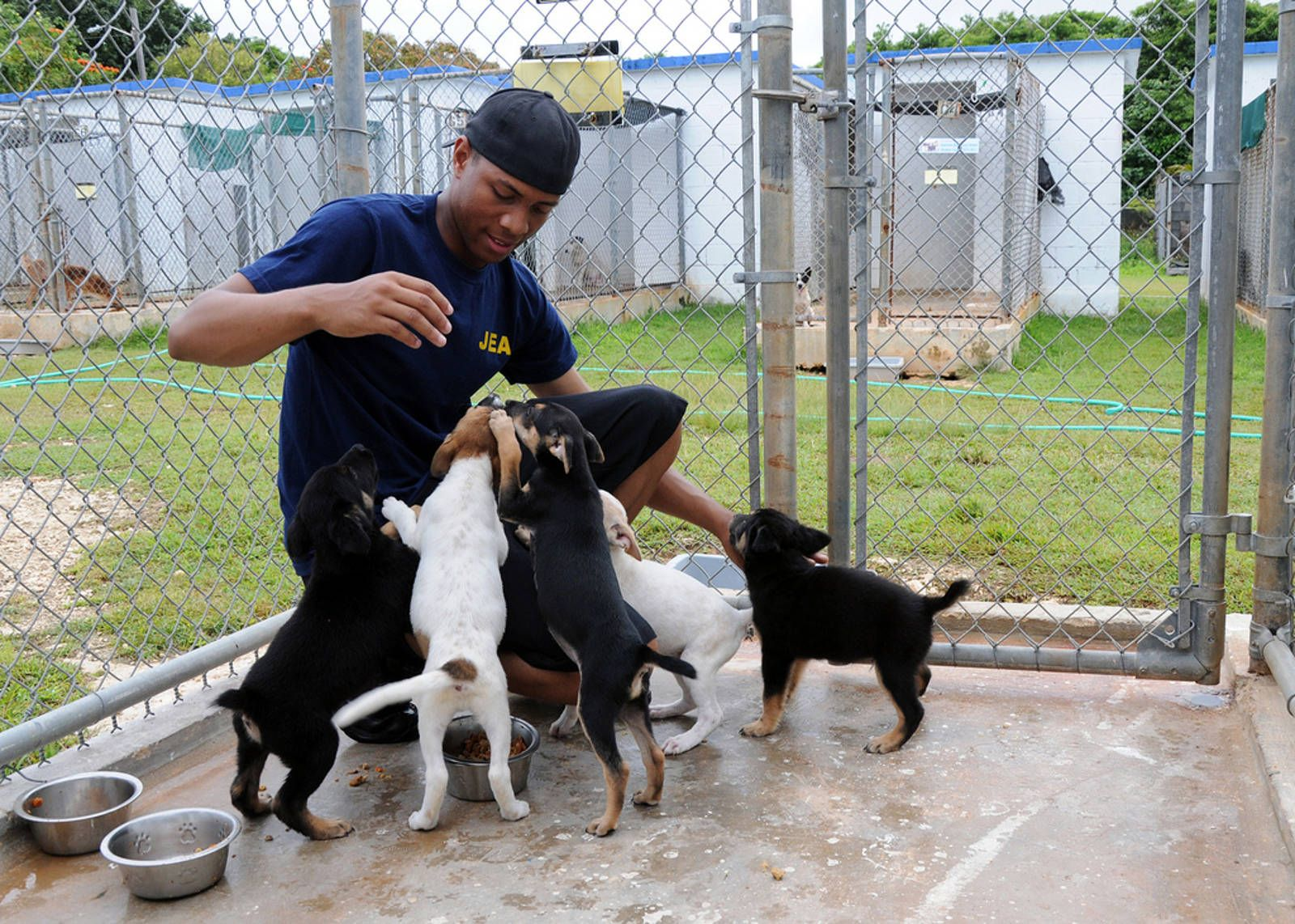 8 Fun Ways You Can Help Your Local Animal Shelter Animal Shelter