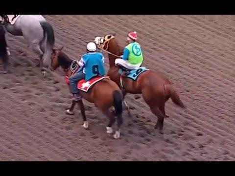 Quarter Horse World Record In 250 Yardas Allens Cash El Taliban
