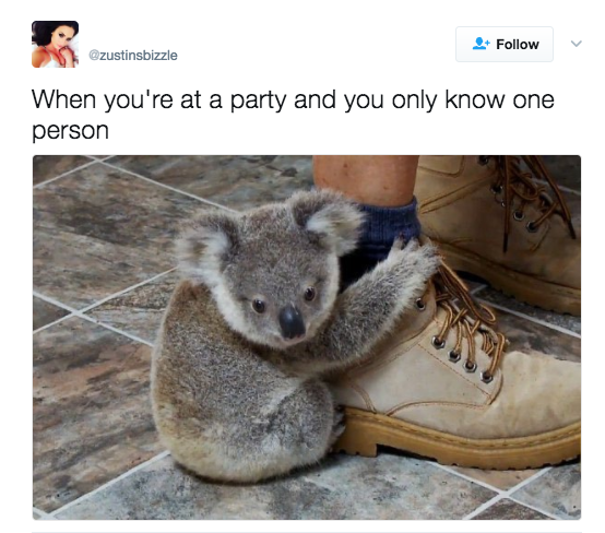 53 Pictures Only Introverts Can Truly Appreciate in 2020 ...  Funny Koala Memes