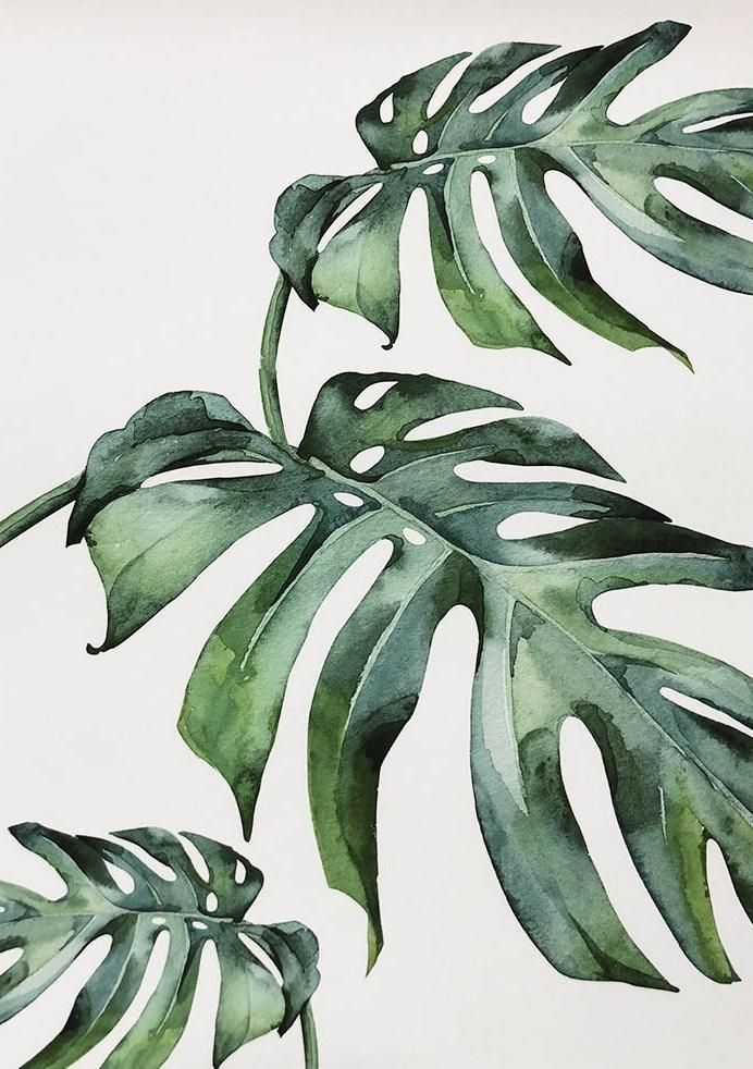 Photo of Beautiful Tropical Leaves Watercolor House Plants Posters Fine Art Canvas Prints…