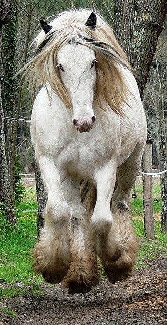 I miss being around horses.