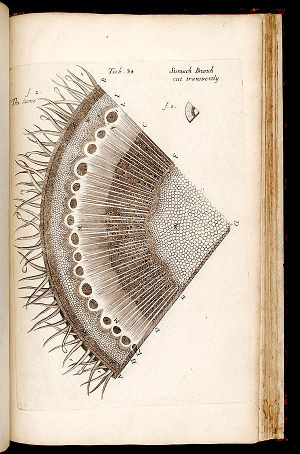 The anatomy of plants [London] :Printed by W. Rawlins, for the author,1682. Biodiversitylibrary. Biodivlibrary. BHL. Biodiversity Heritage Library. http://blog.biodiversitylibrary.org/2012/04/book-of-week-birth-of-microscopic-plant.html