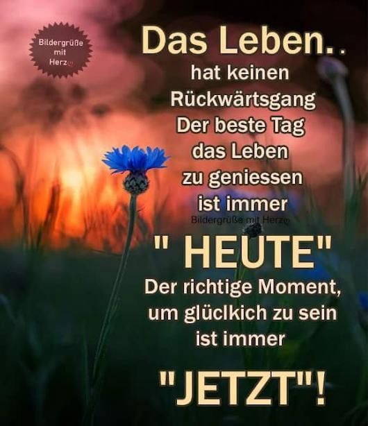 Pin by Aishe Shata on German quotes German quotes, Enjoy