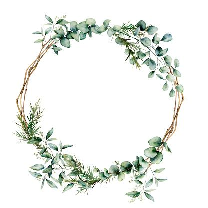 Watercolor eucalyptus branch wreath. Hand painted eucalyptus branch...