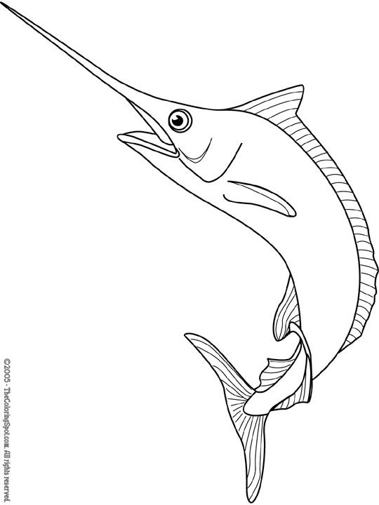 Blue Marlin Color Page Coloring Pages Fish Drawings Swordfish Tattoo