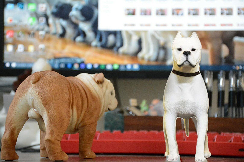 amazon com pet show action figure accessories 1 6 dogo argentino rh pinterest com