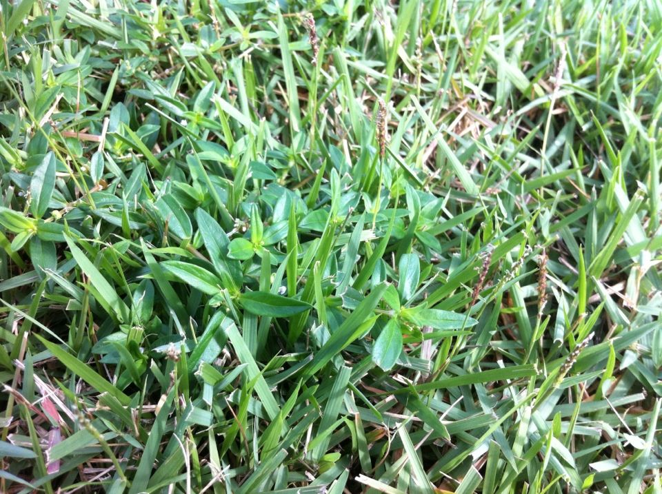 pin on florida lawn issues
