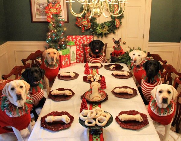there s a kids table at family dinners why not a dogs table too rh pinterest com