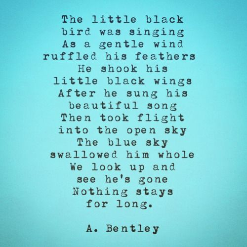 "Black Bird Fly."" I reminder that nothing stays forever. #abentley ..."