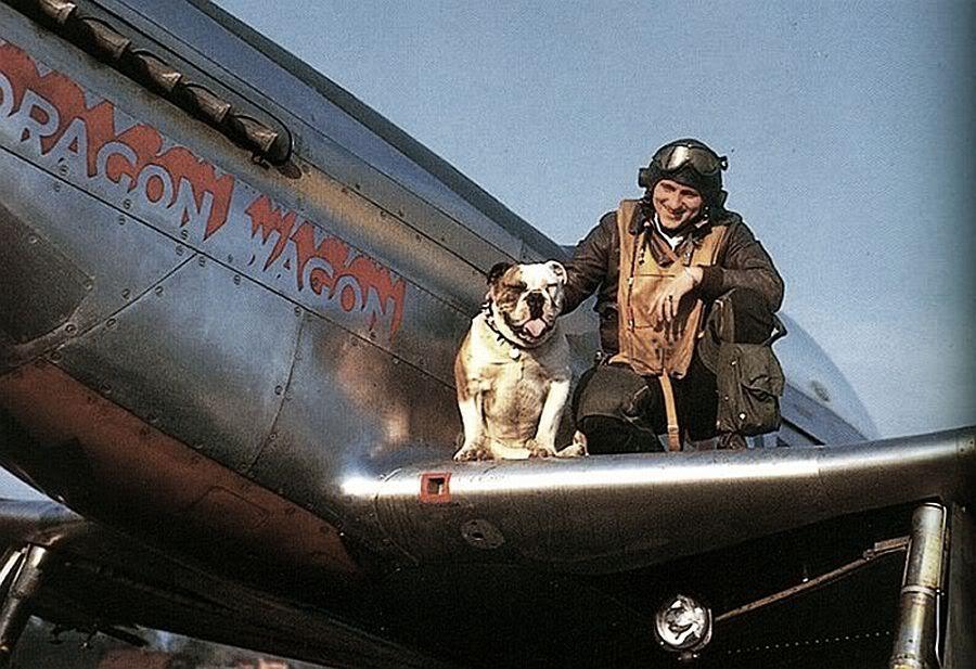 A P51 pilot with his bulldog 1940's War dogs, Aircraft