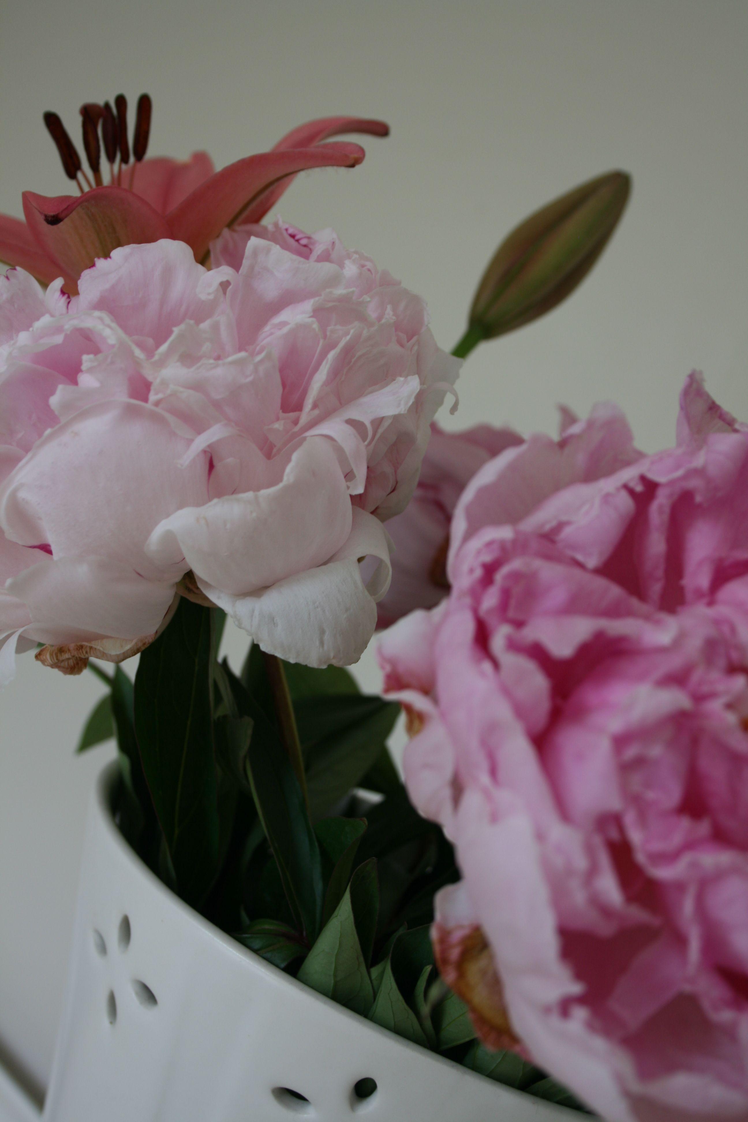 Bouquet plants bouquet photo