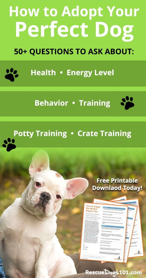 Adopt Your Perfect Dog Pets Dogs Dog Training Dog
