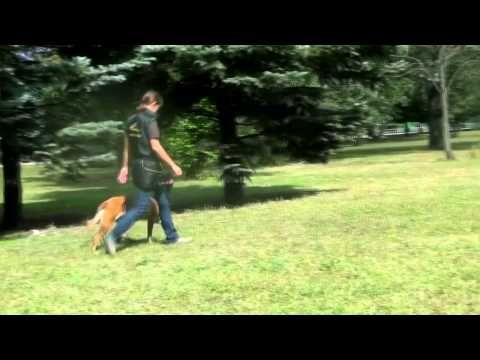 Obedience Training Command Heel Off Leash Youtube Obedience